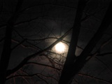 Moon through tree
